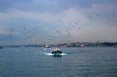 Fishingboat met zeemeeuwen, Istanboel Royalty-vrije Stock Foto