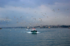 Fishingboat with seagulls, Istanbul Royalty Free Stock Photo