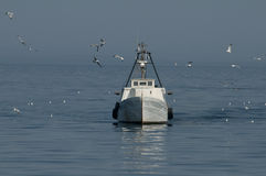 Fishingboat surrounded by seagulls. A fishing boat surrounded by flying seagulls Croatia Royalty Free Stock Photography