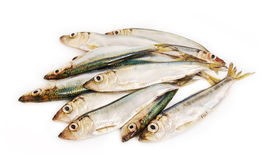Fishis. Stock Image