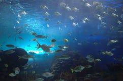 Fishkeeper tank Stock Images