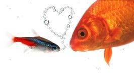 Fishlove imagen de archivo