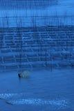 Fishman nahe dem Meerespflanzenbauernhof Stockbilder