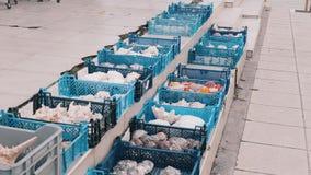 Fishmarket blåa korgar med snäckskal, ostron, havsstjärnor, skal, cockleshell, blötdjursouvenir stock video