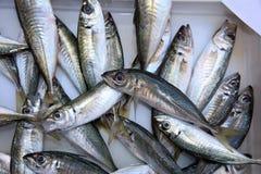 Fishmarket in Catania royalty free stock photos