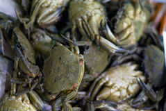 Fishmarket crab. Crabs on the fishmarket displayed on the ice Royalty Free Stock Image