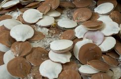 Fishmarket - kammosselen stock foto