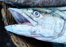 Fishmarket in Kochi, India Royalty Free Stock Photos