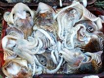 Fishmarket in Kochi, India Royalty Free Stock Photography