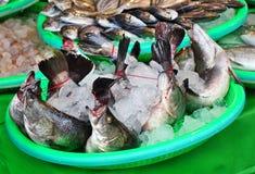 Fishmarket in Taiwan Stockbilder