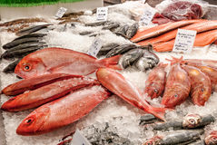 Fishmonger counter with fish on ice. Fishmonger counter with salmon fillets, bass and red snapper on ice Royalty Free Stock Photos
