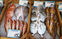 Fishmonger's display Royalty Free Stock Photos