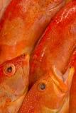 Fishmongers pokazu zbliżenie Fotografia Royalty Free