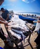 Fishmongers w Taghazout surfują wioskę, Agadir, Morocco 2 Zdjęcia Royalty Free