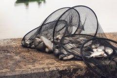 Fish in the fishnet. The fish in the fishnet royalty free stock image