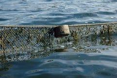 Fishnet fotos de stock
