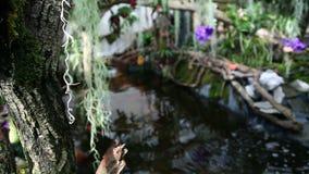Fishpond in garden stock video