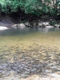 Fishs в природе Стоковая Фотография