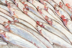Fishs моря Стоковое Фото