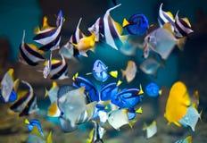 fishs Стоковые Фото