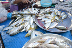 Fishs 免版税库存图片