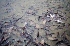 Fishs Стоковое Изображение