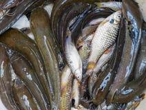 Fishs fotos de archivo libres de regalías