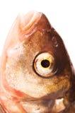 Fishs Auge Stockfotografie