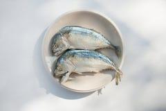 Fishs dello sgombro Immagini Stock Libere da Diritti