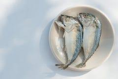 Fishs dello sgombro Fotografia Stock Libera da Diritti