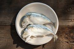 Fishs dello sgombro Fotografie Stock Libere da Diritti