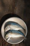 Fishs dello sgombro Immagini Stock