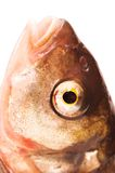 Fishs Eye Stock Photography