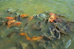 Fishs in farm Stock Photo