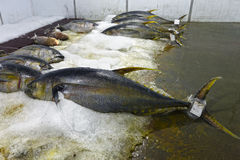 Fishs. Fish warehouse with several samples Stock Photography