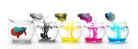 Fishs que lucha que salta con cuatro colores primarios foto de archivo libre de regalías