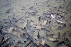 Fishs Stock Image