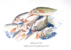 Fishs watercolor painted. Fishs watercolor on paper painted Royalty Free Stock Photos