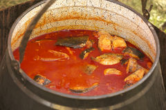 Fishsoup Royalty Free Stock Photos