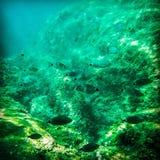 Fishswarm Royaltyfria Bilder