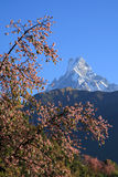 Fishtail&Himalaya Mountains.Nepal Stock Photo