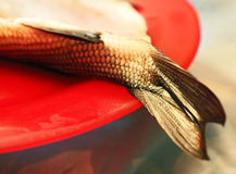 Fishtail on red plate Stock Photo