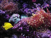 Fishtank Stock Foto's