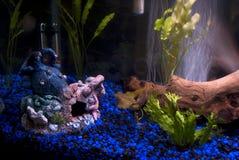 Fishtank Kunstprodukte Stockfotografie