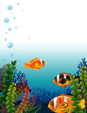 A fishworld Stock Photos