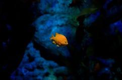 Fishy контраст Стоковые Изображения RF