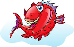 Fishy. This is a fish based on the red snapper Stock Photos