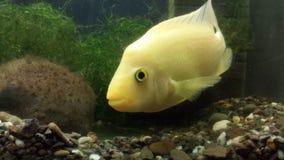 Fishy Royalty Free Stock Photo