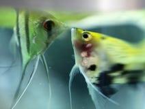 Fishy buziak fotografia stock