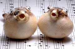 Fishy Duet Royalty Free Stock Photos